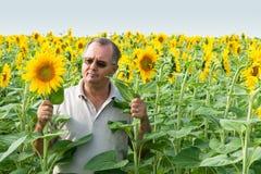 Granjero en un campo de flor del sol Imágenes de archivo libres de regalías