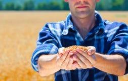 Granjero feliz que sostiene granos maduros del trigo Fotos de archivo libres de regalías