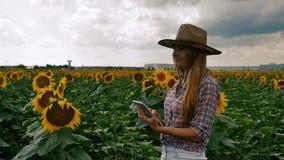 Granjero Girl que mecanograf?a en la tableta en la plantaci?n de la flor del sol almacen de video