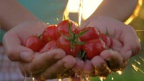Granjero Is Holding Cherry Tomatoes And Pouring Them con puesta del sol del fondo del agua metrajes