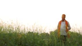 Granjero indio en el campo de la mostaza negra almacen de video