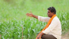 Granjero indio en el campo de maíz verde almacen de metraje de vídeo