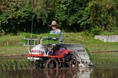 Granjero japonés que planta un campo del arroz por el alimentador Foto de archivo