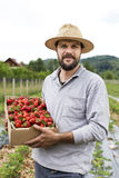 Granjero joven en el campo de la fresa que sostiene los wi llenos de una caja de cartón Fotografía de archivo libre de regalías