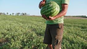 Granjero joven que cosecha la cosecha de la sandía en el campo de la granja orgánica metrajes