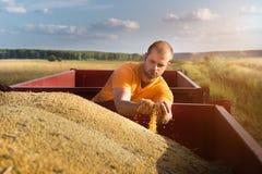 Granjero joven que mira granos del maíz en tractor remolque imagenes de archivo