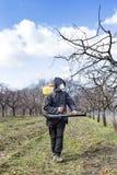 Granjero joven que rocía los árboles con las sustancias químicas fotos de archivo libres de regalías