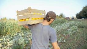 Granjero joven que va en el campo con la caja de madera de calabaza orgánica del arbusto imagen de archivo libre de regalías
