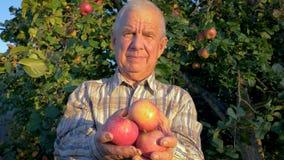 Granjero mayor Holds Ripe Apples en sus manos el fondo del jardín almacen de video