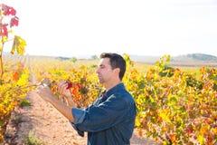 Granjero mediterráneo del viñedo que comprueba las hojas de la uva Fotos de archivo