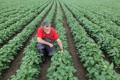 Granjero o agrónomo en campo de la soja foto de archivo libre de regalías