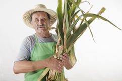 Granjero orgánico con maíz recién cosechado fotos de archivo libres de regalías