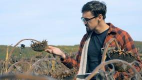 Granjero profesional que elabora en un campo secado, cierre Concepto dañado de la cosecha metrajes