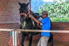 Granjero que alimenta el caballo negro Foto de archivo libre de regalías