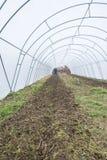 Granjero que ara el suelo en invernadero Foto de archivo libre de regalías