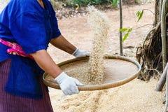 Granjero que avienta el arroz Imagen de archivo