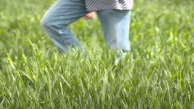 Granjero que camina en campo de trigo en metrajes