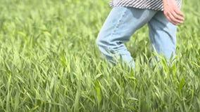 Granjero que camina en campo de trigo en almacen de video
