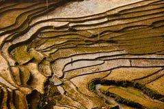 Granjero que camina a lo largo de campos del arroz de la paleta Fotos de archivo