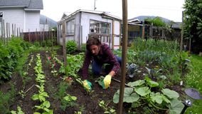 Granjero que cultiva un huerto en el patio trasero 4k metrajes