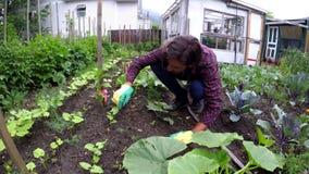 Granjero que cultiva un huerto en el patio trasero 4k almacen de video