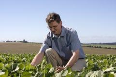 Granjero que examina la cosecha Fotografía de archivo libre de regalías