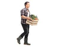 Granjero que lleva un cajón por completo de verduras fotografía de archivo libre de regalías