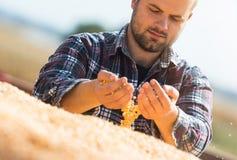 Granjero que mira granos del maíz en tractor remolque Imagen de archivo