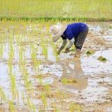 Granjero que planta el arroz Foto de archivo libre de regalías