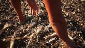 Granjero que prepara el suelo para la estación próxima Ecología de Permaculture que cultiva concepto almacen de video