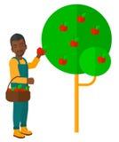 Granjero que recoge manzanas stock de ilustración
