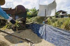 Granjero que recolecta el arroz de la manera tradicional Ubud, Bali Indonesia Fotos de archivo libres de regalías