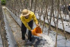 Granjero que riega sus plantas Imagen de archivo libre de regalías