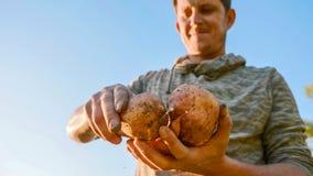 Granjero que sostiene la cosecha fresca de la patata dulce en manos y que la examina, primer fotos de archivo