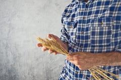 Granjero que sostiene los oídos del trigo Fotografía de archivo