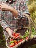 Granjero que sostiene una cesta con las verduras escogidas frescas Foto de archivo libre de regalías