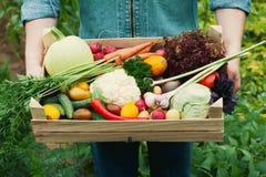 Granjero que sostiene una cesta llena de verduras y de raíz orgánicas de la cosecha en el jardín Acción de gracias del día de fie