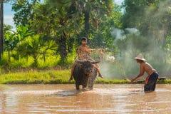 Granjero que sumerge el agua y que la lanza al búfalo del baño Imagen de archivo libre de regalías