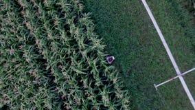 Granjero que supervisa la cosecha del maíz con una opinión superior de la tableta metrajes