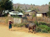 Granjero que tira del búfalo Imagenes de archivo