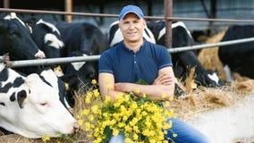 Granjero que trabaja en granja con las vacas lecheras imagenes de archivo