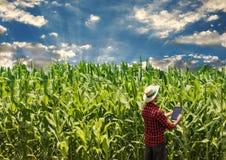 Granjero que usa la tableta digital en campo de maíz cultivado foto de archivo
