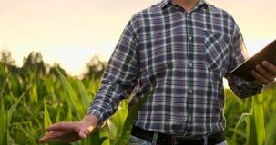 Granjero que usa la tableta digital en el campo de maíz, uso moderno de la tecnología en actividad cada vez mayor agrícola almacen de metraje de vídeo
