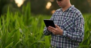 Granjero que usa la tableta digital en el campo de maíz, uso moderno de la tecnología en actividad cada vez mayor agrícola metrajes