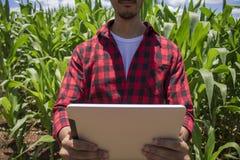 Granjero que usa la tableta digital en la plantación cultivada del campo de maíz Imagenes de archivo