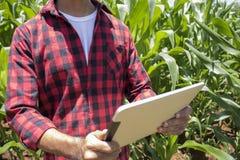 Granjero que usa la tableta digital en la plantación cultivada del campo de maíz Fotografía de archivo libre de regalías