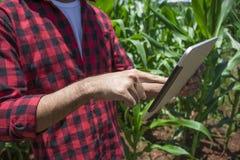 Granjero que usa la tableta digital en la plantación cultivada del campo de maíz Fotos de archivo