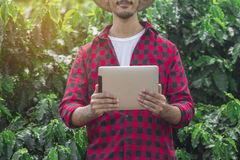 Granjero que usa la tableta digital en la plantación cultivada del campo del café Fotografía de archivo