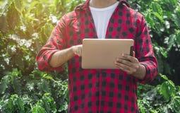 Granjero que usa la tableta digital en la plantación cultivada del campo del café Imagen de archivo