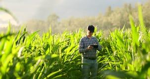 Granjero que usa la tableta digital, plantación cultivada del maíz en fondo Uso moderno de la tecnología adentro almacen de video